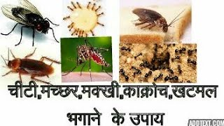 Get rid of ant,flies,cockroaches, bed bugs and mosquito #shraddhaDIY