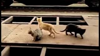 Video Zvíře na 2 použití