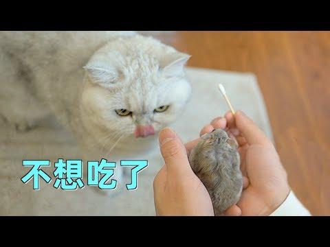 清理倉鼠塞囊、貓咪潔牙的清潔行動!