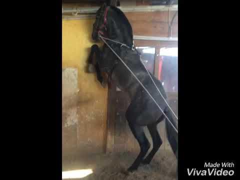 Balsamo cavallo per listruzione congiunta - Trattamento