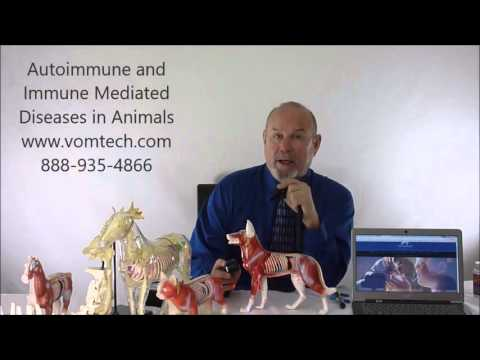 Video Autoimmune and Immune Mediated Diseases in Animals