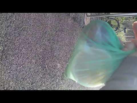 Gyűjtemény a paraziták tisztítására