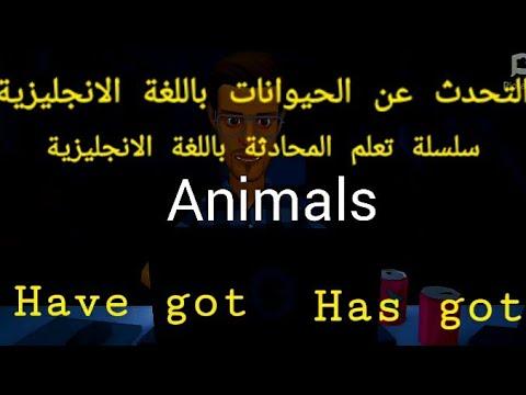التحدث عن الحيوانات باللغة الانجليزية/ استخدامات Have got ,Has got/سلسلة تعلم المحادثة | مستر/ محمد الشريف | كورسات تأسيسية منوع  | طالب اون لاين
