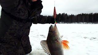 Рыбалка в коми зимой на окуня