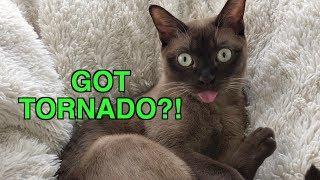 Смотреть онлайн Как кот реагирует на учебную сирену