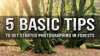 5 TIPS For FOREST Photography