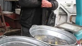"""ИГ """"ЭкоПраво"""" общественный контроль. г. Воронеж. РЫБА"""