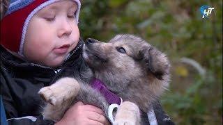 Новгородские зоозащитники отмечают Всемирный день животных
