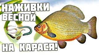 Рыбалка ловля карася наживки и насадки