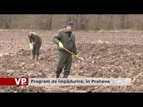 Program de împădurire, în Prahova