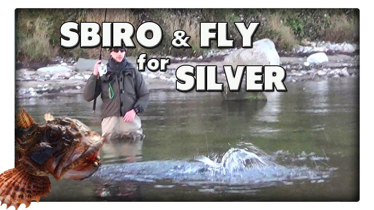 Angeln mit Sbiro und Fliege - Blanke Meerforellen in der Schonzeit