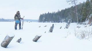 Ловля окуня в коряжнике зимой