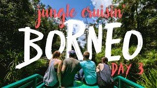 Borneo Jungle Cruise to see Orangutans Day 3 Vlog