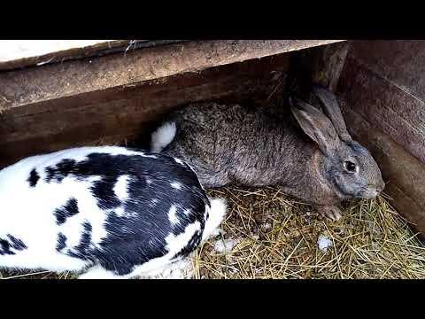 , title : 'Кролики/rabbits/