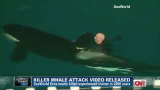 sea world whale attack actual video - Website to share and share the
