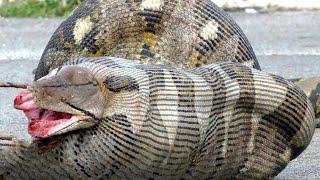 10 Most Dangerous Animals In Australia