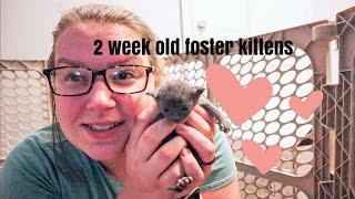 2 week old KITTEN CARE   Foster kittens