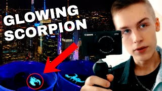 GLOWING Scorpions + Feeding CRAZY Tarantulas | NYC VLOG