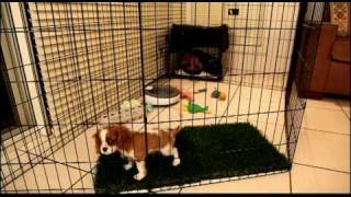 Long Term Confinement Area For Puppies By Urban Dog Training