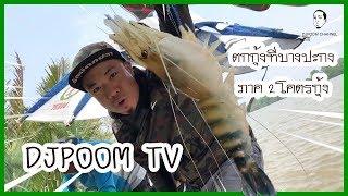 DJPOOM TV ออกล่าสัตว์ใหญ่กัน โคตรกุ้ง!!! @บางปะกงกงกงกง