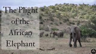 The Plight of the African Elephant
