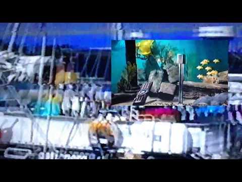 firm - Maxelll (video)