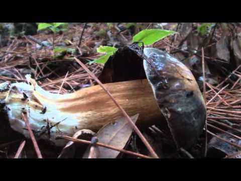 Mezzi da un fungo di unghie che stanno dalla Tailandia