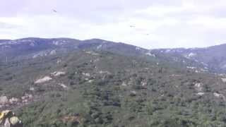 preview picture of video 'Greifvögel (Geier) in Naturpark in Andalusien'