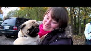 preview picture of video 'Sunshine Pugs'