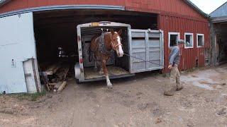 DRAFT HORSES: My Top 5 Feeding Practices