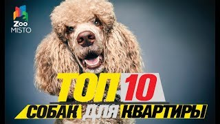 Топ 10 собак для квартиры\Top dogs for the apartment