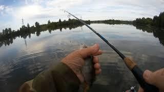 Ловля окуня на отводной поводок в июле