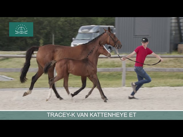 TRACEY-K VAN KATTENHEYE