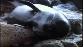 64 - Одиссея Жака Кусто - Киты и дельфины