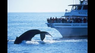 Whale Watching - A Complete Trip (With Helpful Tips) - Boston, Gloucester, Plymouth and ProvinceTown