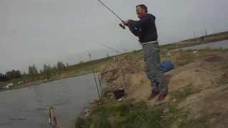 Рыбалка в рыбхозе лубна орловской области