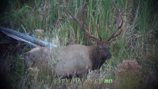 Hunting Non-typical Archery Elk.  Kapowsin Bull Elk Western Washington Archery 2015 DeepWater.