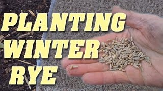 How to Plant Winter Rye as a Cover Crop