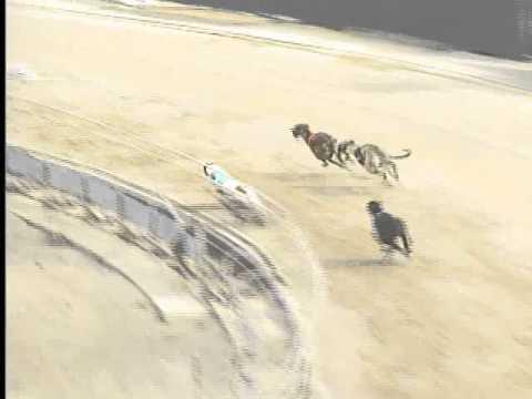 Race 41