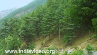 The soothing greenery of Himachal Pradesh