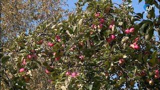 Новгородские общественники посадили в саду областной больницы в Колмове яблони