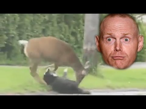 Bill Burr - Deer Vs Dog Vs Cat