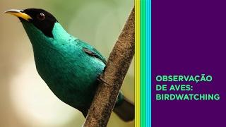 Birdwatching - Observação De Aves || Êxito Rio Turismo