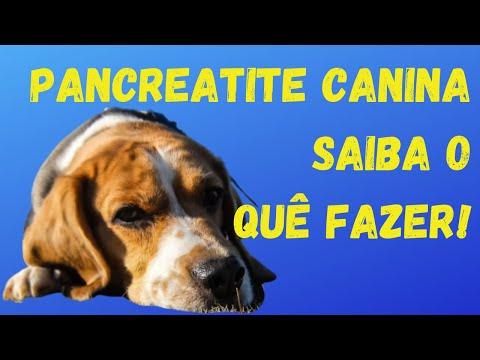 , title : 'Pancreatite Canina: Tipos, Sintomas, Como Controlar e o que