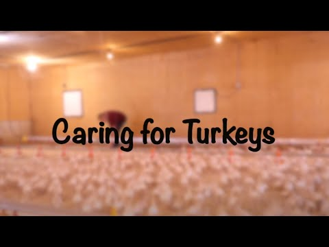 , title : 'Caring for Turkeys