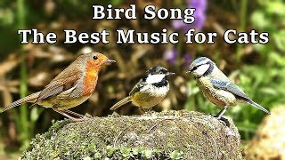 Bird Song - The Best Calming Music for Cats - Musica Para Gatos