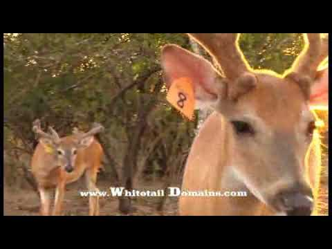 Antler Growth Explained
