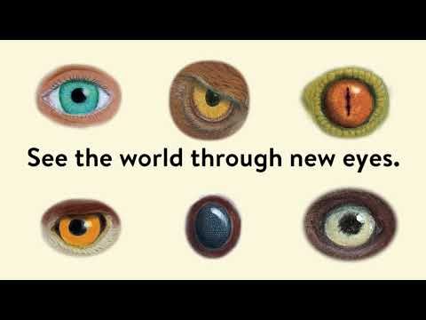 Eye Spy Book Trailer From What On Earth Books