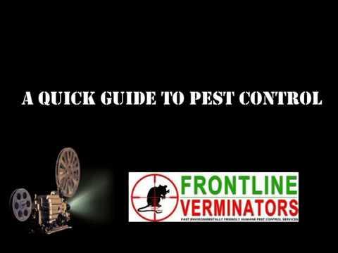 Intoksik ng parasites sa counter presyo