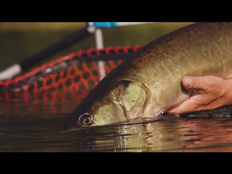 Microski - Micro Muskies off the Grid
